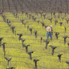 Thumbnail image for Corison Winery (Napa Valley)