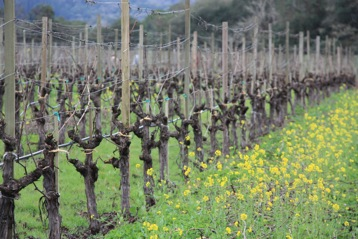 donnelly-creek-vineyard