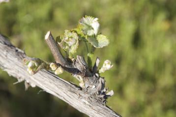 spring-vines-flowering