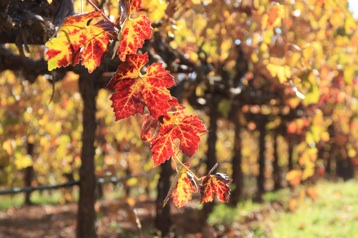 Post image for The Sierra Foothills: Family Wineries & Fall Colors