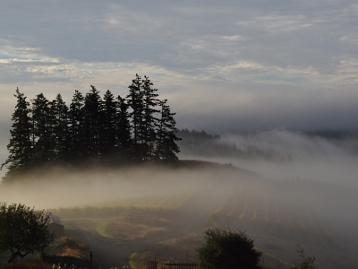Sonoma-Coast-Fog