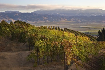 Paraiso Vineyards-Santa Lucia Highlands
